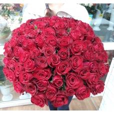 101 Роза Кения крупная