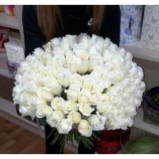 101 белая роза эквадор 40-60см