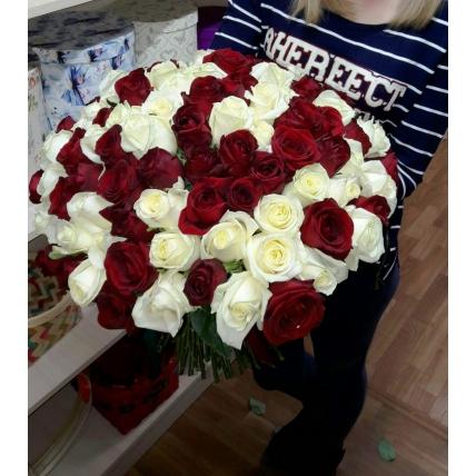 101 РОЗА ЭКВАДОР 50-70см красно-белая